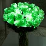 interflora roses, glow in the dark halloween