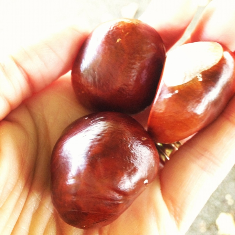 conkers in